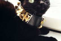 Fashion's Four-Pawed Friends / by Look TV