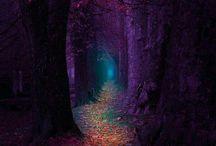 floresta muito bonita