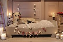 Dog and Cat Accessories / Don't forget your pets at christmas time!