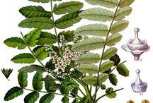 Quadro plantas