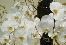 Ikébana / La Voie des Fleurs - art traditionnel japonais de composition florale / by Des Fleurs Pour Tous