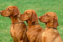 Hungarian dog breeds