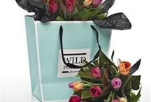 Wild Poppies Tuilps