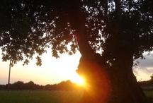 tramonti / foto