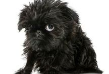 Puppies / The most adorable puppies