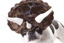 Dog Costumes / All the cutest dog costumes for Halloween and any occasion. Find where you can buy cute ones and how you can make them on your own too.