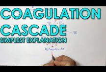 Kogulation