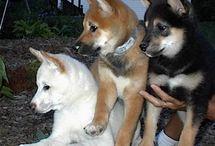 Favorite Dog Breeds / by Carol Davis-Nieman