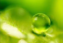 :o) green