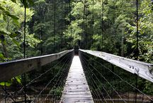 Red river gorge trip / by mclanier