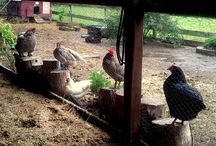 Hobby Farm - Animals / by Judy E