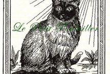 TAROT CATS - OSVALDO