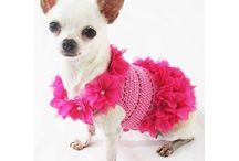 Dog Fashion and Photography