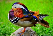 Beautiful Birds / Wildly different and beautifully unique... I am fascinated by God's creativity... / by Janna K