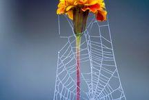 spinnen kunst