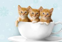 Cutie CATS ♥ / Very many people love cats. Me too ♥♥♥ :3