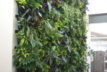 Jungle Phorest