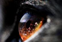 Gorges animal' eyes