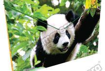 Carpetas Animal Planet / Línea Escolar Primavera Regresa a Clases con TODO