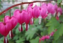I LOVE Gardening :) / by Jean Hanington