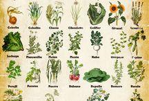 Que plantar