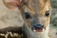 Cute Animals! / by Tara Martin