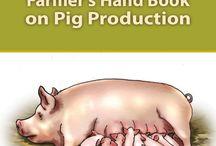 Pig /Swine Farming
