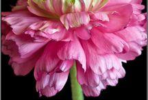 Flowers / by Gardening Gals