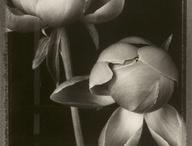 Flowers / Luonto