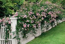 The Garden Fence / by Aunt Viv