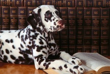 Books + Dogs