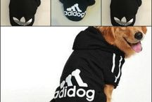 Adidas Dog Hoodie Review