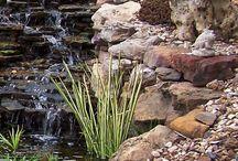 Ponds / Garden pond