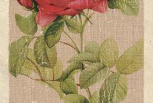 RÓŻE / o różach