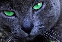 gato / by Lindy Clarke