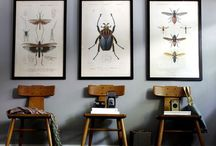 Insects, Bugs and Beetles!