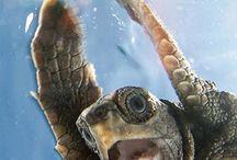 Turtle Love / by Gwen Mefford Ickes