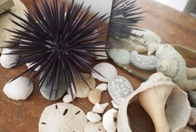 Mom's Beachy Bathroom / Ideas for Debbie's bathroom redecoration! Seashells, lighthouses, and pelicans, oh my!