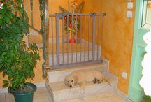 Cancello Divisorio per Cani / Divisorio per Cani