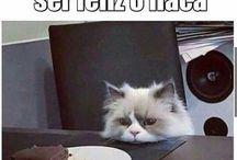 Gatitos :3