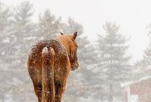 styled | Winter Bohemian Horses