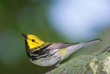Birds / by Princeton Press