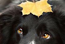 photoshoot chien