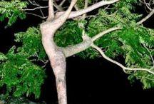 Ağaçlar