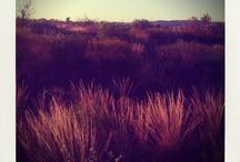 Pilbara, Western Australia / Pictures I've taken of the Pilbara, Western Australia.....Filled with red dirt and vast landscapes