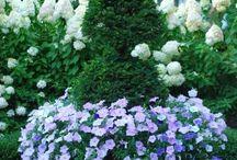 Linds' garden