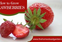 Edible plants I grow / Container gardening
