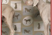 weimaraners / by Audrey Patrick