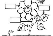 Partile unei flori