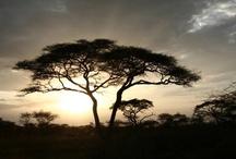 My travel bucket list / Africa, Alaska, Ireland, Scotland, England, Australia, Peru, Costa Rica